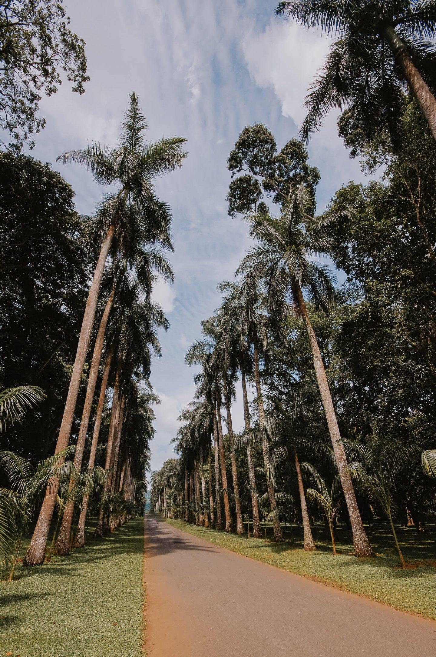 Royal Botanical Gardens Kandy Sri Lanka