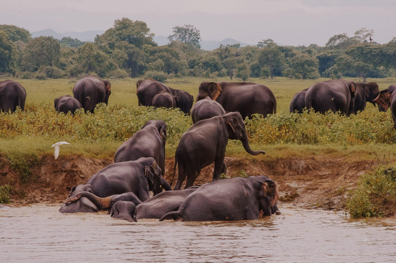 Elephants at Udawalawe National Park, Sri Lanka