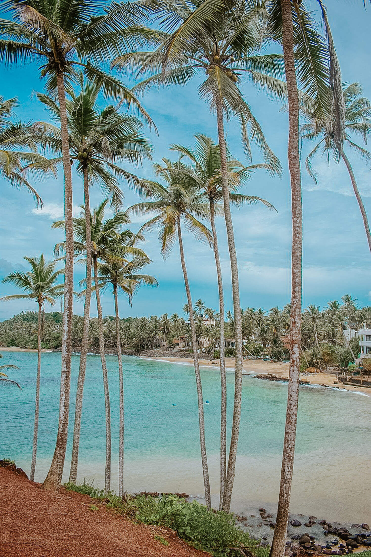what to do in Mirissa Sri Lanka