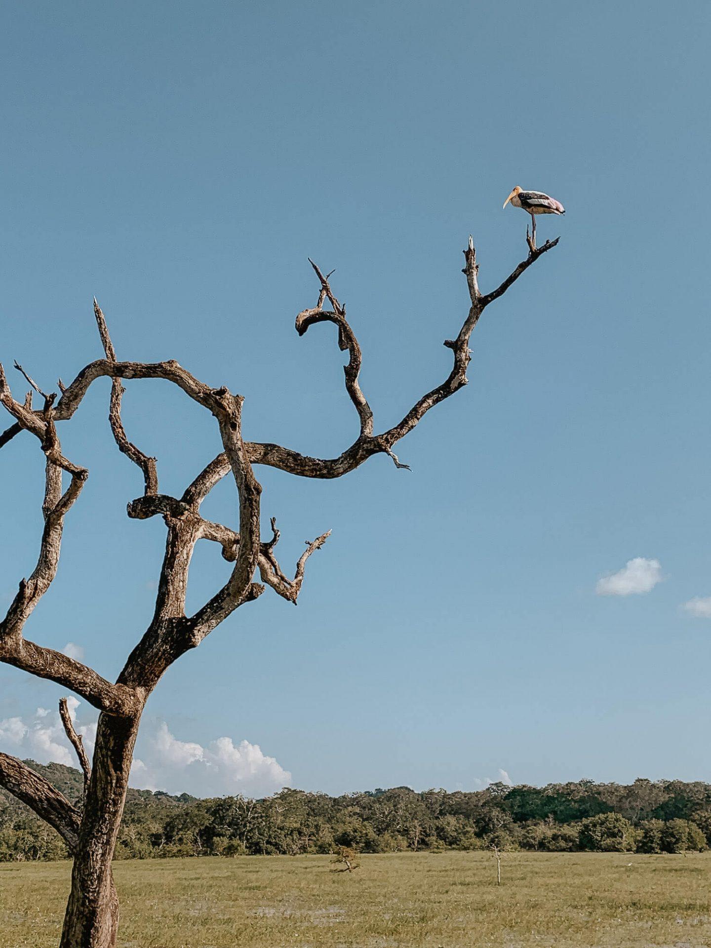Birds in a Sri Lanka National Park